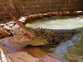 Wyndham Zoological Gardens and Crocodile Park - Kalgoorlie Accommodation