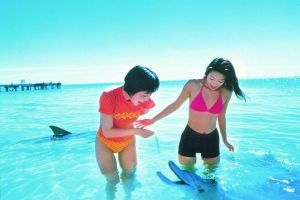 Monkey Mia Dolphins  Shark Bay Air Tour From Perth - Kalgoorlie Accommodation