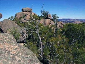 Evans Crown Nature Reserve - Kalgoorlie Accommodation